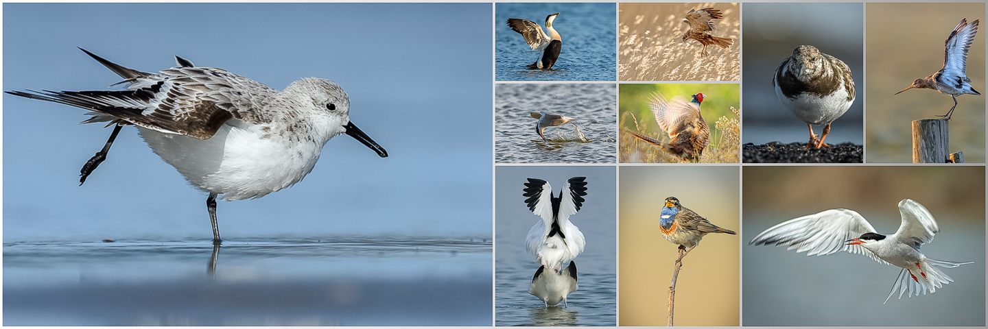 Collage Texel 1