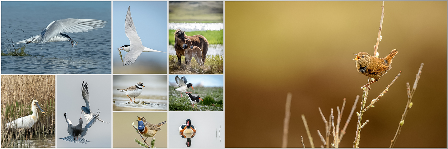 Collage Texel 2